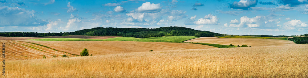 Obraz big panoramic view of landscape of wheat field, ears and yellow and green hills fototapeta, plakat