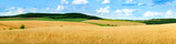 Fototapeta Landscape - beautiful landscape panoramic view of wheat field, ears and yellow and green hills