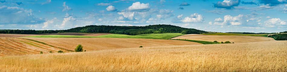 duży panoramiczny widok na pole pszenicy, kłosy i żółte i zielone wzgórza