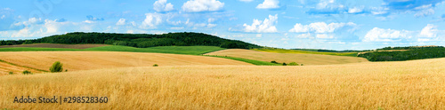 Stampa su Tela beautiful landscape panoramic view of wheat field, ears and yellow and green hil