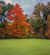 Red Sugar Maple On The Golf Course
