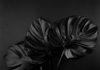 Shiny dark natural monstera leaves bouquet. Black Friday tropical banner, poster background template.