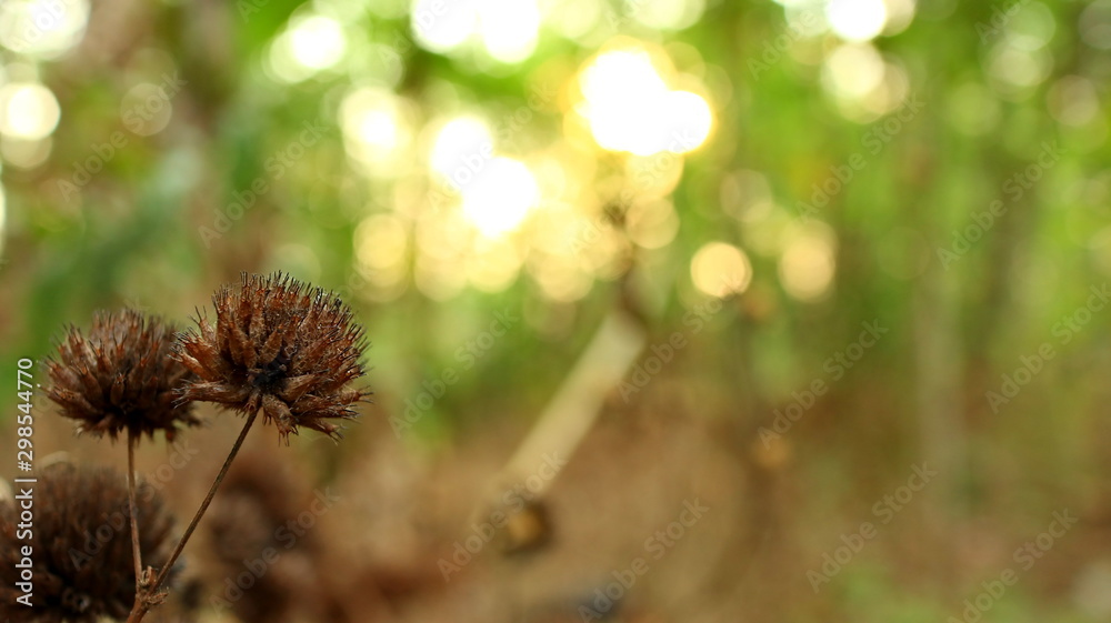 Fototapety, obrazy: dead and dried wildflowers, photographed with selective focus, background blur and bokeh