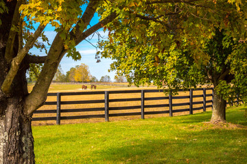 Horses at horsefarm. Country autumn landscape.