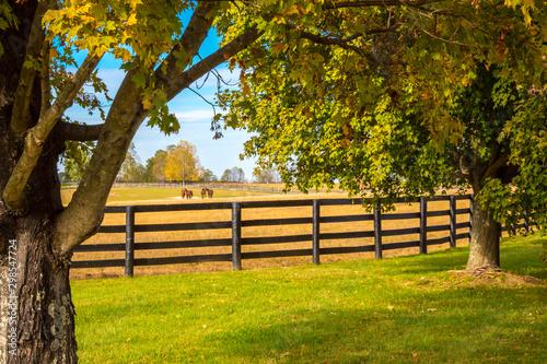 Montage in der Fensternische Herbst Horses at horsefarm. Country autumn landscape.