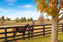 Two Loving Horses At Horsefarm. Autumn Country Landscape.