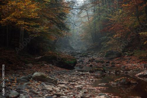 Autocollant pour porte Rivière de la forêt autumn landscape,wallpapers with autumn motifs, red and yellow in October