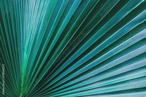 Wall mural - tropical palm leaf and shadow, abstract natural green background