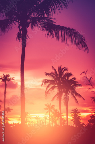 Arbre Tropical palm tree on sunset sky cloud abstract background.