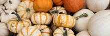 Panoramic Background With Many Different Colored Pumpkins. Autumn Background