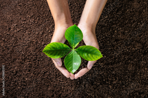 hand holding young plant on soil background. eco concept Canvas-taulu