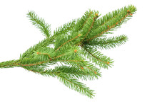 Small Green Spruce Branch Isolated On White Background