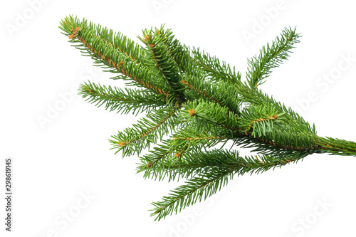 Fotomural  Small green spruce branch isolated on white background