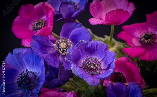 Photo vintage pink violet blue anemone bouquet on black background, fine art still lif