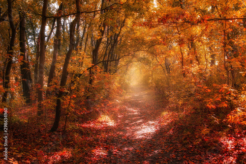Foto auf Leinwand Braun landscape of bright Sunny autumn forest