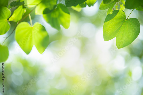 Autocollant pour porte Arbre Green leaf with beautiful bokeh with copy space for text. Nature and fresh background concept.