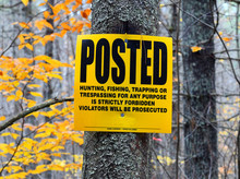 Posted Sign On Tree In Forest ...