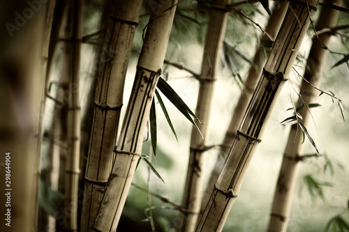 Photo bamboo