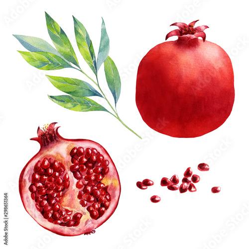 Obraz na plátně watercolor fruit pomegranate on white background