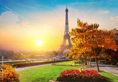 Foto auf Gartenposter Gelb Schwefelsäure Flower and Eiffel Tower