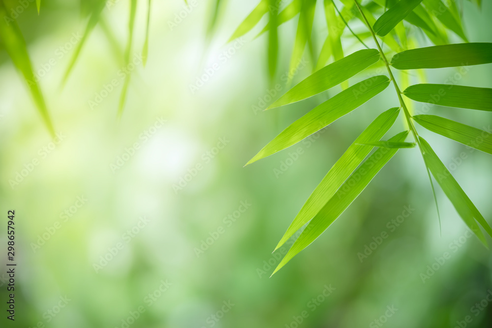 Fototapety, obrazy: Bamboo leaves, Green leaf on blurred greenery background. Beautiful leaf texture in sunlight. Natural background. close-up of macro with free space for text.