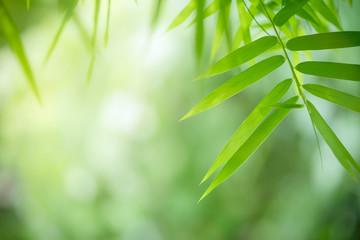 Bamboo leaves, Green leaf o...