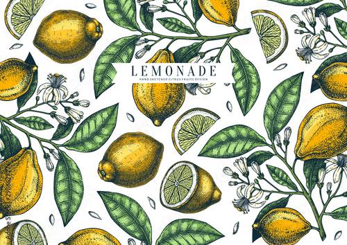 Fotografia Hand drawn citrus fruits background