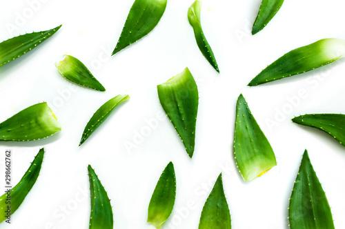 Canvastavla Aloe vera plant isolated on white background