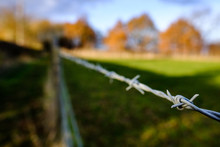 Barbed Wire Fence Seen At The Edge Of A Grazing Field At A Dairy Farm