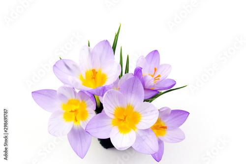 Autocollant pour porte Crocus crocus - one of the first spring flowers