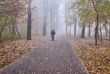 Autumn Park In The Fog