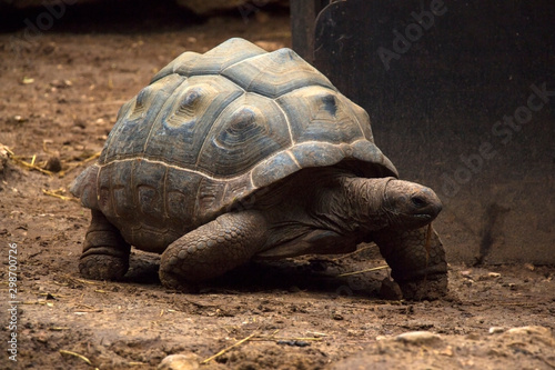 brown turtle in garden