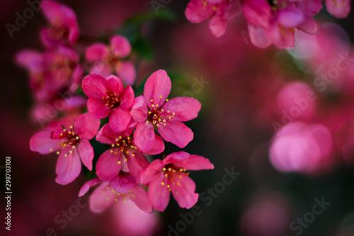 Fototapety, obrazy: pink flowers on a background