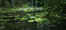 Enchanting Magical Forest With A Pond And Water Lilies