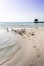 Vertical Photo Of A White Sand Beach In Mexico, Isla Mujeres. Seagulls And A Crystal Clear Water In The Foreground And A Pier In The Background.