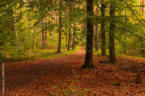 Papiers peints Route dans la forêt beautiful forest path in sunny autumn