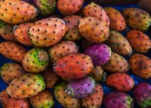 Exotic Mediterranean Cactus Fruits Fichi D'India Background