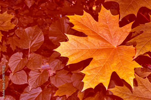 Recess Fitting Brick autumn landscape with bright colorful foliage. Indian summer.