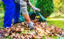 Seasonal Raking Of Leaves In The Garden. Concept Of Cleaning And Caring For The Garden. Man Rakes Withered And Colorful Leaves In The Garden. Autumn Cleaning Before Winter, Spring Cleaning Garden.