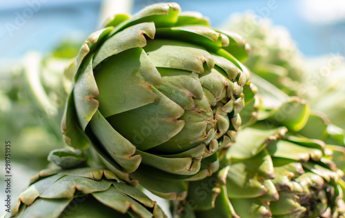 Bunch of fresh raw artichokes heads from artichoke plantation in Argolida, Greec Canvas Print