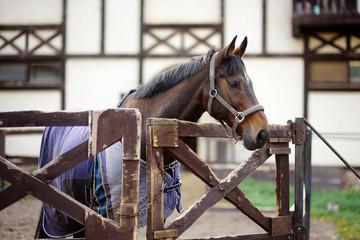 Horse on levada of equestrian club.