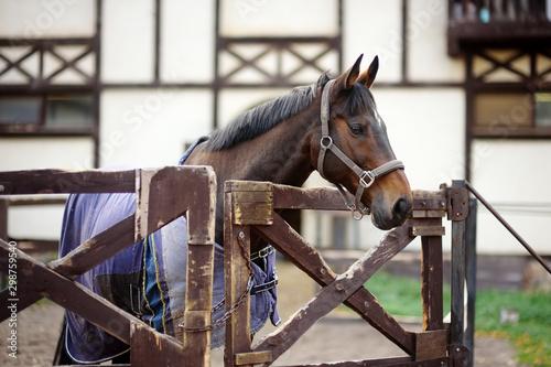 Cuadros en Lienzo Horse on levada of equestrian club.