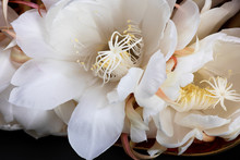 Close Up Of White Flower, Nigh...