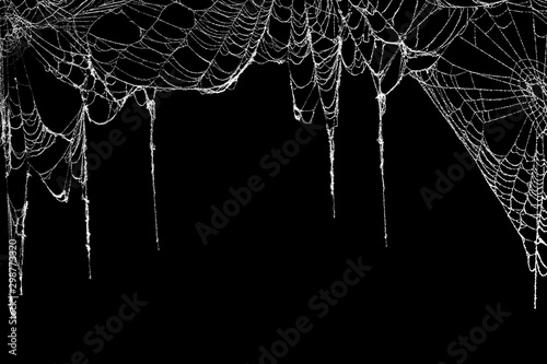 Real creepy spider webs hanging on black banner as a top border Canvas Print