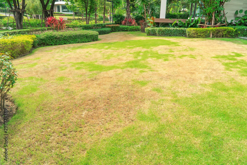 Fototapeta Pests and disease cause amount of damage to green lawns, lawn in bad condition and need maintaining, Landscaped Formal Garden, Front yard with garden design, Peaceful Garden, Path in the garden