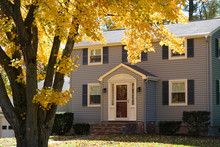 Yellow Autumn Trees In Front Of Houses In Residential Area