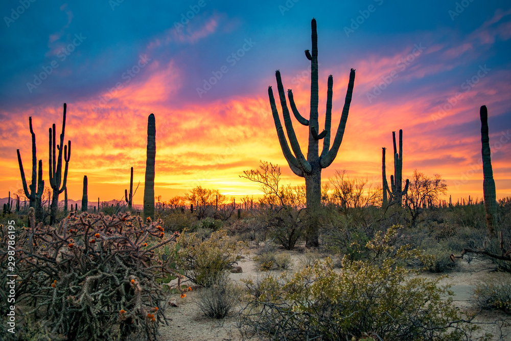 Fototapety, obrazy: Dramatic Sunset in Arizona Desert: Colorful Sky and Cacti/ Saguaros in Foreground  - Saguaro National Park, Arizona, USA