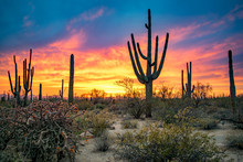 Dramatic Sunset In Arizona Desert: Colorful Sky And Cacti/ Saguaros In Foreground  - Saguaro National Park, Arizona, USA