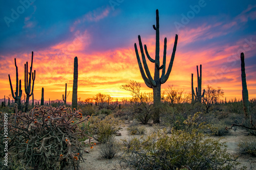 Slika na platnu Dramatic Sunset in Arizona Desert: Colorful Sky and Cacti/ Saguaros in Foregroun