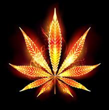 Cannabis Fire Leaf